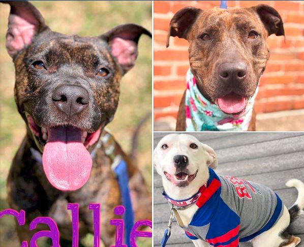 All Funds contributed will be used for animals housed at the City of Buffalo Animal Shelter.