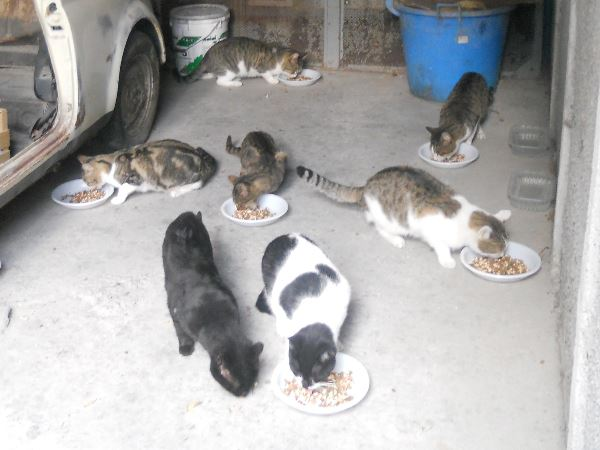 CARE OF FERAL CATS